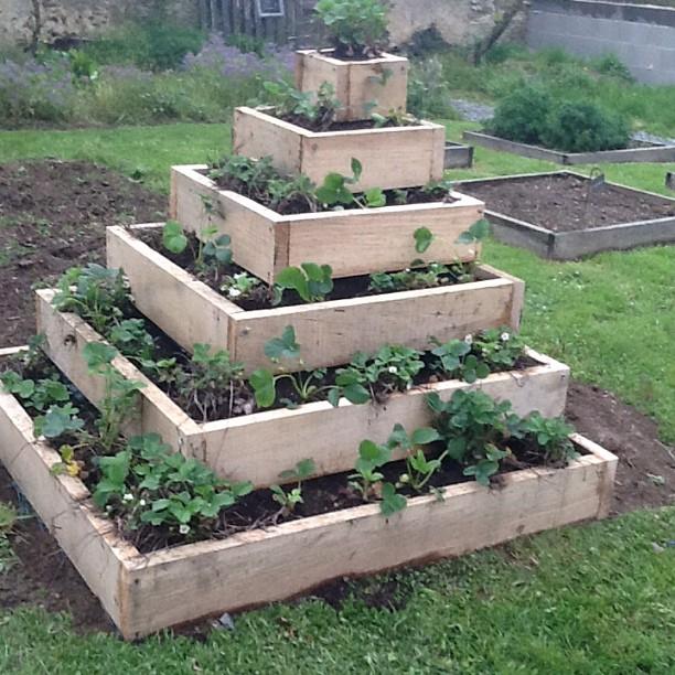 Cascade de fraisiers au jardin g tes la br joli re - Cascade de jardin castorama lyon ...